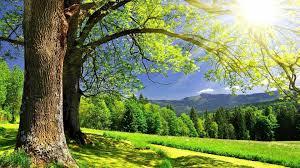 wallpaper desktop nature summer. Wonderful Nature Sunshine Summer Wallpaper HD For Desktop Nature