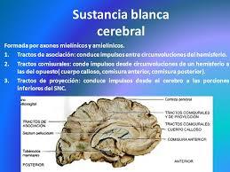 anatomía topográfica neurológica ppt