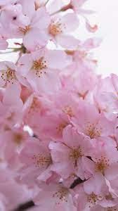 flower wallpaper, Pink flowers wallpaper