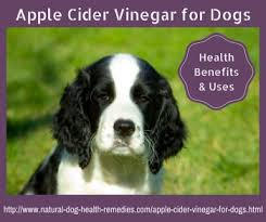 Apple Cider Vinegar for Dogs | Uses and Benefits