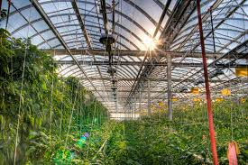 Image result for conservative greenhouse