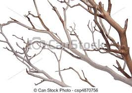 Manzantia Decorative Tree Branches Isolated on white with a clipping path.