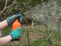 Fruit Tree Care Spray U0026 Weed Control  Stark Brou0027s  Orchard Homemade Spray For Fruit Trees