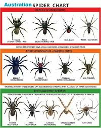 Free Spider Identification Chart 6 Get Your Free Usa Spider Identification Chart In The Mail