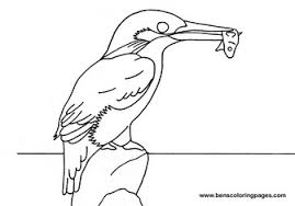 Small Picture Kingfisher coloring book