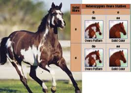 Breeding Horses For Color Expert Advice On Horse Care And