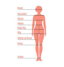 Human Body Measurements Chart Vector Images 28
