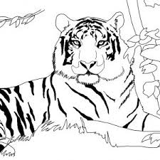 Small Picture Printable Tiger Coloring Pages adult