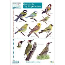 Guide To Top 50 Garden Birds Of Britain Chart
