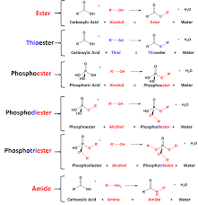 Ch105 Chapter 10 Compounds With Sulfur Phosphorus And