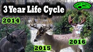 Whitetail Antler Growth Chart Amazing Whitetail Deer Antler Growth Best 3 5 Year Old Buck Ever Hunting