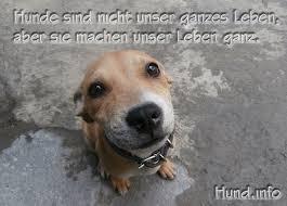 Hundesprüche Hunde