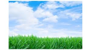 The Grass Is Always Greener Tessa Van Wade Fitness