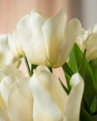 ... White Dutch Tulip Arrangement ...