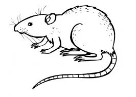 Small Picture Rat coloring page Animals Town Free Rat color sheet