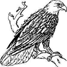 eagles clipart free download. Delighful Free Banner Freeuse Stock Bald Eagle Line Drawing At GetDrawings Intended Eagles Clipart Free Download