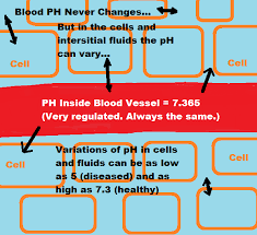 Testing Body Ph