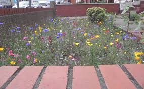 Small Picture Garden Design Garden Design with How to Create a Wildflower