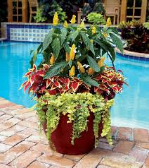 Small Picture 69 best Landscaping images on Pinterest Florida landscaping