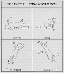 Body Language Meanings Meaning Of Cat Tail Movements End Your Cat Is Probably Afraid Cat