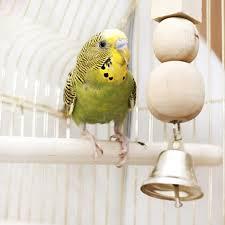 Bird Feather Allergies | Healthy <b>Pets</b> | <b>Animal Planet</b>
