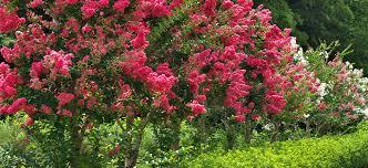 A Persian Carpet Garden With Espalier Lemon  Pomegranate Trees Underplanting Fruit Trees