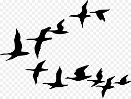 flock of birds clipart. Unique Clipart Flock Goose Bird Flight Clip Art On Of Birds Clipart O