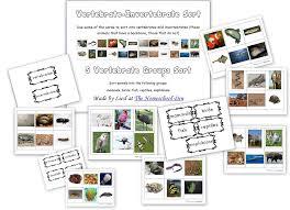 Montessori Cards: Vertebrates-Invertebrates; 5 Vertebrate Groups ...