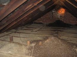 bat control and removal in attic louisville ky