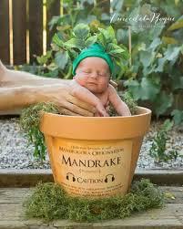 Mandragola #cute ⚡ ⚡ Hermione ⚡ | Foto bambini, Foto neonati, Cose  divertenti