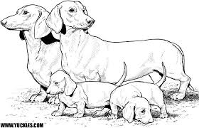 Small Picture Yellow Lab Puppy Coloring Pages Coloring Pages