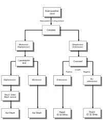 Flow Chart Gram Positive Bacilli Identification Www