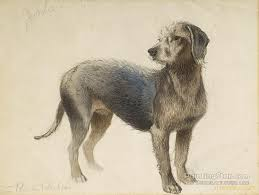 bedlington terrier artwork by charles burton barber