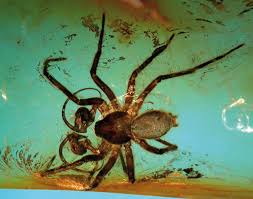 Biodiversity of fossils in amber     Deposits Magazine Deposits Magazine It is almost two decades since the original blockbuster movie  Jurassic Park  brought the existence of fossil insects in amber  fossilised tree resin  into
