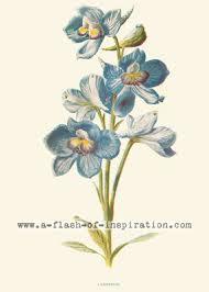 Vintage Illustrations A Flash Of Inspiration Botanical Illustrations Vintage