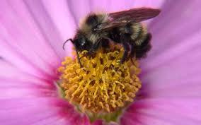 Пища пчел пища пчел нектар цветочная пыльца перга химический  Пища пчел