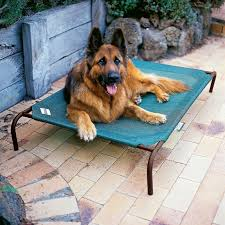 elevated pet bed large