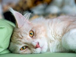 Image result for bored cat