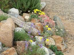 southern california gardens can support all sorts of native plants