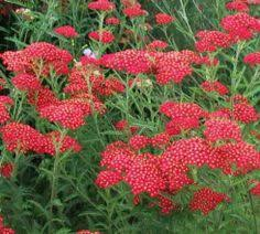 46 best Perennials in front of house images on Pinterest in 2018 ...