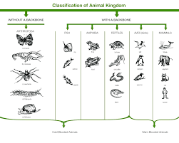 Animal Flow Chart Ks2 Animal Classification Flow Chart Example