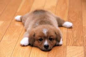 cute dogs and puppies. Interesting And Dog Cute And Puppy Image With Cute Dogs And Puppies