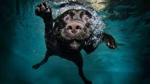 Dogs Underwater Wallpapers - Top Free ...