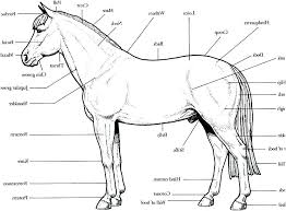disney spirit horse coloring pages horses printable pro book