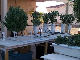plants growing in 2 liter bottle flood and drain hydroponic system
