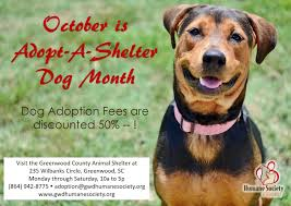 animal shelter dogs for adoption.  Shelter The Humane Society Of Greenwood Is Celebrating Octoberu0027s National AdoptA ShelterDog Month At The County Animal Shelter And Shelter Dogs For Adoption