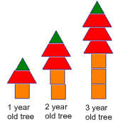 Growing Patterns Best Patterns And Multiplication