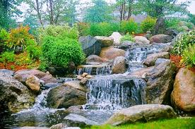 Small Picture Backyard Landscape Design Dana Landscaping Water Gardens