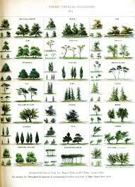 Palm Tree Chart Image Result For Palm Tree Identification Chart Tree