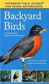 Backyard Bird Watch